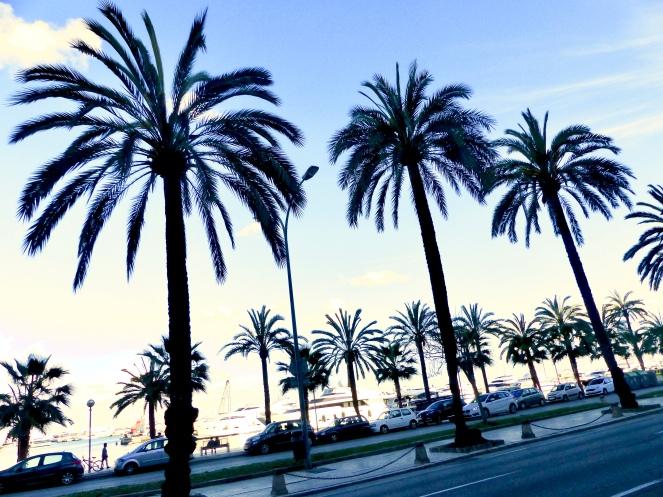 palmiers-palma